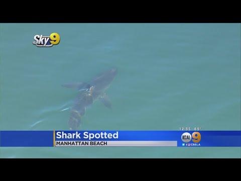 Great White Shark Spotted Near Manhattan Beach Pier