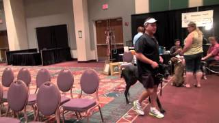 "Sit Means Sit Dog Training ""live"" Demo At Pet Expo"