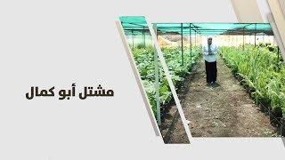 أمل القيمري  - مشتل أبو كمال -  زراعة