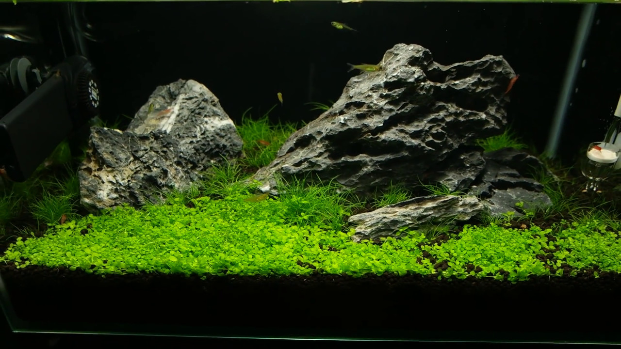 Iwagumi Aquascape - Day 56 - YouTube