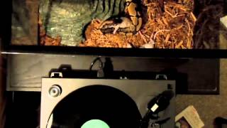 Union of The Snake [remix] - Duran Duran - TheDailyVinyl music video #52