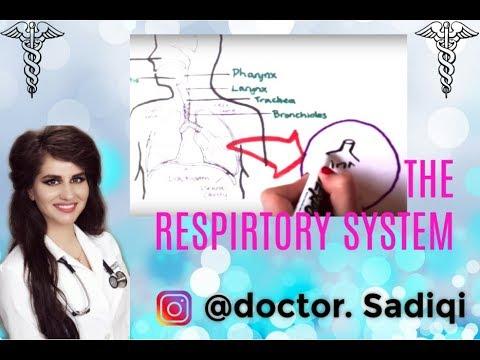 Respiratory system made easy!!!