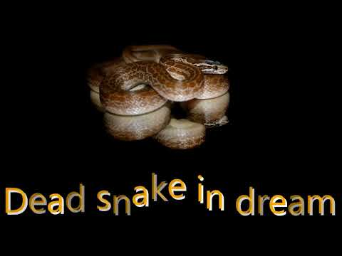 What Does It Mean When You Dream About Snakes Myhiton