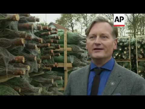 Pine growers stumped by challenging export market ++REPLAY++