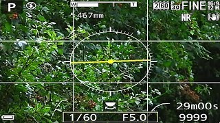 Nikon P1000 live HDMI output test