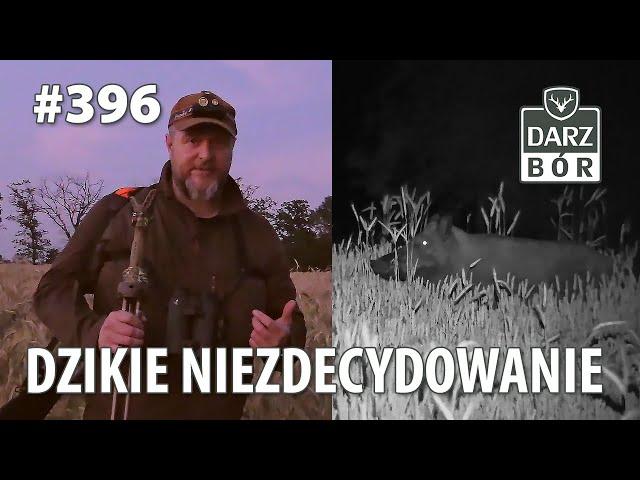 Darz Bór odc 396 - Dzikie Niezdecydowanie