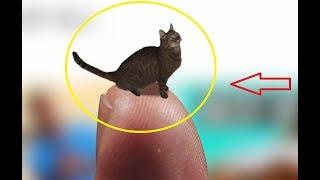 Нано КОШКА – самый маленький котик в мире. Приколы с котами