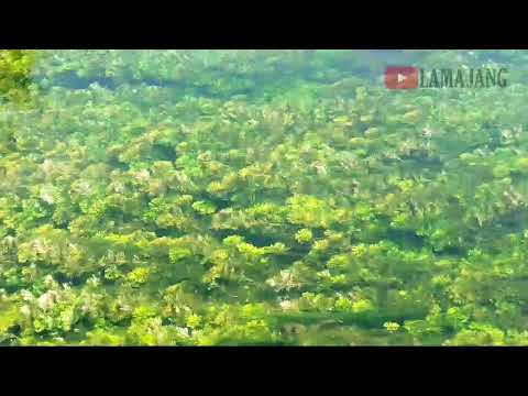 Tanaman Air Selokambang CABOMBA CAROLINIANA