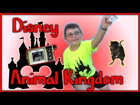 Pandora + Flight of Passage + Disney Rats + Animal KIngdom
