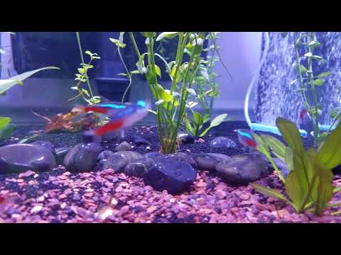 30 Gallon Freshwater rimless  Slick E