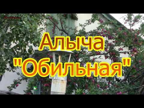 Алыча русская слива сладкая и крупноплодная