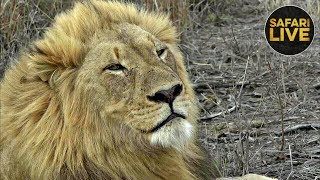 safariLIVE- Sunset Safari - November 14, 2019