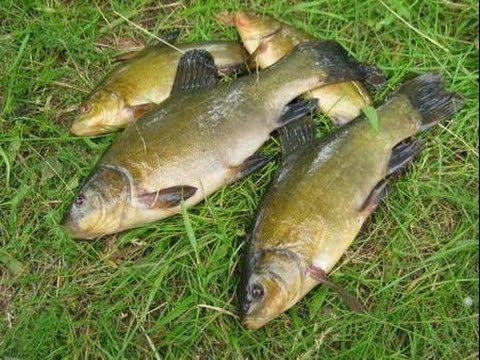 секреты рыбалки донная снасть река РСН _ Secrets bottom fishing tackle river