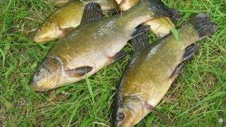 секреты рыбалки донная снасть река РСН _ Secrets bottom fishing tackle river(, 2014-01-29T22:21:56.000Z)