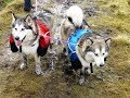 Backpacking with Alaskan Malamutes / Arctic Expedition Training