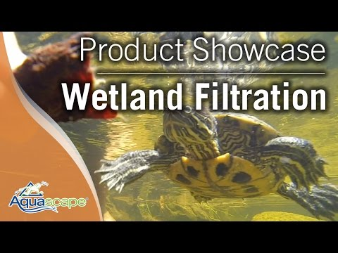 Turtle Habitat - Wetland Filtration - Gwinnett Center