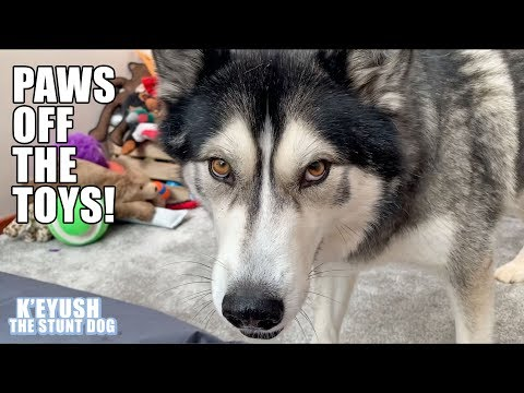 husky-discusses-donating-toys-and-installs-toy-box-alarm!