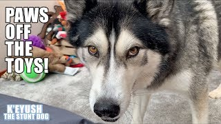 husky-discusses-donating-toys-and-installs-toy-box-alarm