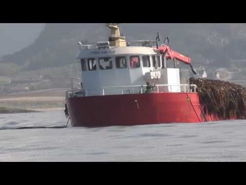 Seaweed Trawling - ecocide environmental disaster.