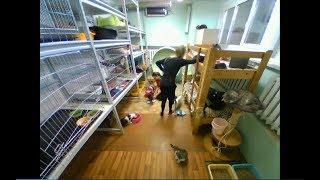 """Приют  для кошек Минск  трансляция стрим """"Супер кот"""""""