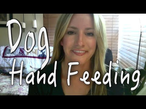 Hand Feed Your Dog To Build Trust