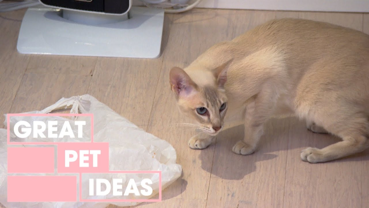 Strange Cat Cravings | PETS | Great Home Ideas