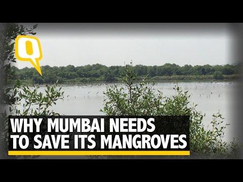 The Quint: Saving the Mangroves: Why Mumbai Needs its Nature