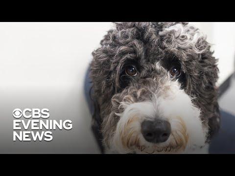 James Burlander - Dog Owners: Certain Types Of Dog Food Linked To Heart Disease