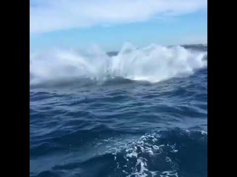 Whales Jump Out of the Water Near Sydney Heads