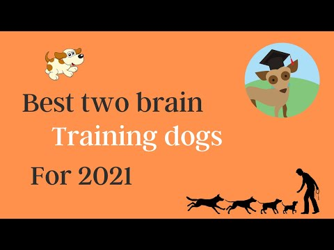 Best two brain training dogs, correcting common dog problems, guide, Cesar Millan, Top books