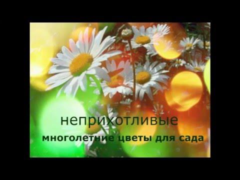 Многолетние цветы для оформления клумб лучшие варианты с