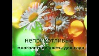 видео цветы многолетники для сада неприхотливые