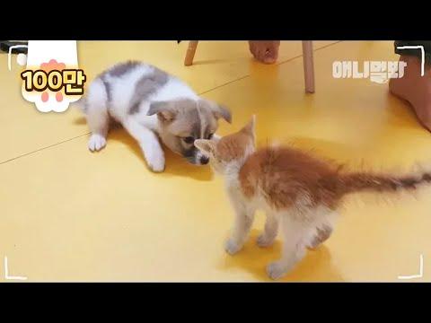 아무도 예상 못했던 이 강아지와 고양이의 미래 ㅣ Though Abandoned, Dog And Cat Siblings Have Each Other's Back