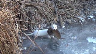 Это не лунка а вход в щучье гнездо Зимняя рыбалка на жерлицы 2020 2021