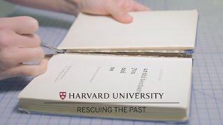 Harvard conservators repair books