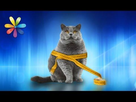 Помогаем коту сбросить лишний вес – Все буде добре. Выпуск 984 от 16.03.17
