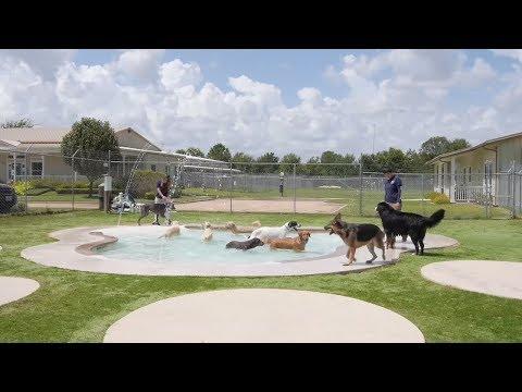 Pamper your pet at Meadowlake pet resort