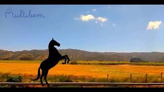 Şarkı söyleyen atlar oyunu