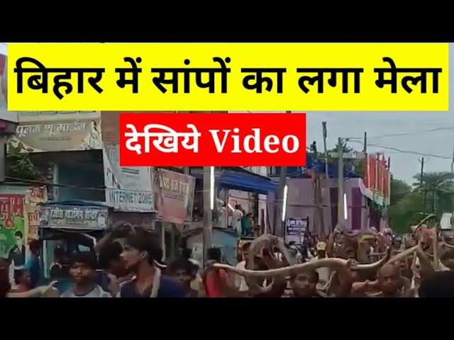बिहार के समस्तीपुर में सांपों का लगा मेला, लोग सांप को गले में लपेट घुमने लगे शहर