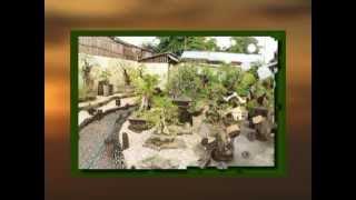 Bonsai, Southern Negros