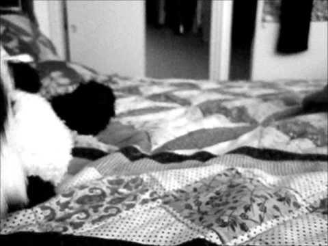 Atami~ The Rose [JUJU] My Music Video