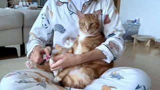 #6. 다섯마리 고양이 발톱깎는 날
