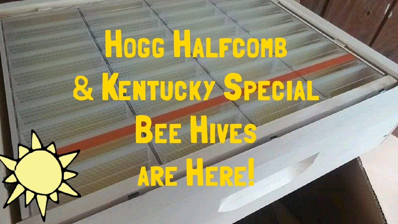 Hogg Halfcomb Kit & Bee Hive Delivery - Bee Keeping Adventures!