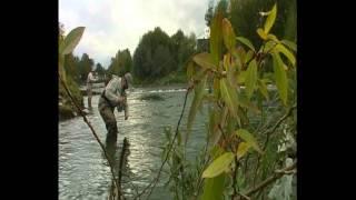 Biały Dunajec - potokowce na nimfę