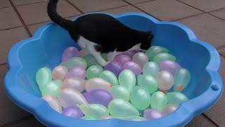 Cat Vs Water Balloons   Slow Motion   4K Ultra Hd   Original