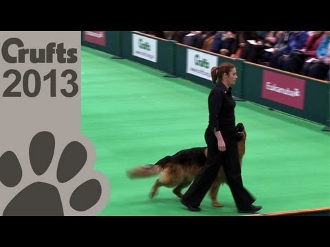 Obedience Dog Championships - Day 3 - Crufts 2013 (Jenny Gould & Zakanja Bitter 'N' Twisted)