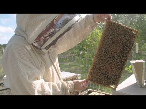 Second Act Careers: The Beekeeper
