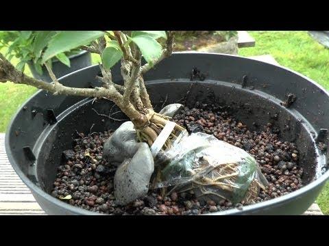 ananas vermehren ganz einfach und ich zeige euch wie e doovi. Black Bedroom Furniture Sets. Home Design Ideas