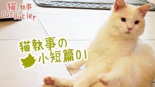 [貓の執事 CatButler]猫執事的日常小片段01