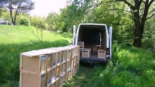 Пчелопакеты КАРПАТКА 2017(Продажа пчелопродукции Мы рады Вам предложить широкий спектр продукции любое количество единиц товара..., 2017-02-03T19:38:01.000Z)